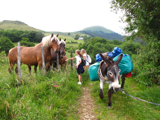4 days in Auvergne volcanoes with a donkey - 3 nights in hotel