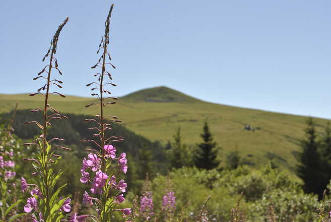 Auvergne by hiking with Aluna Voyages