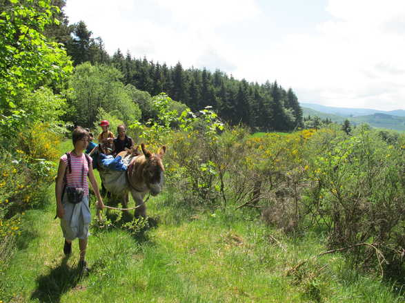 Familly trip with a donkey in Auvergne with Aluna Voyages