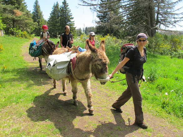 Familly trip with a donkey in France with Aluna voyages