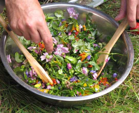 Gathering edible plants and wild gastronomy in France with Aluna Voyages