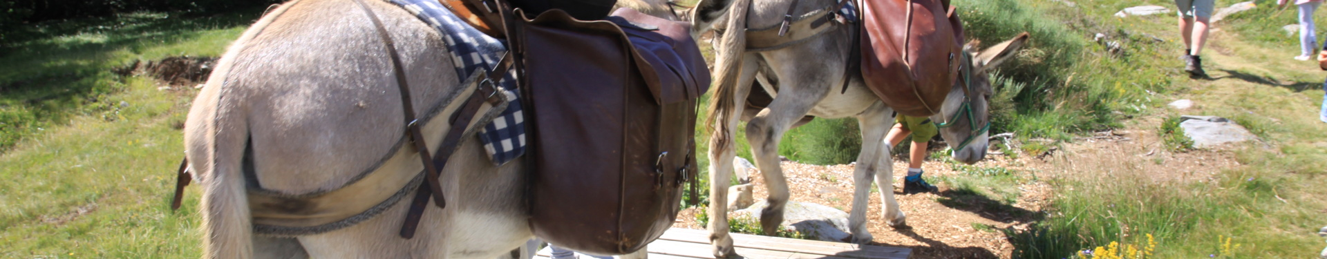Hiking with a donkey in Auvergne
