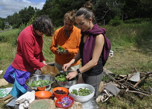 Picking up edible plants and make wild gastronomy